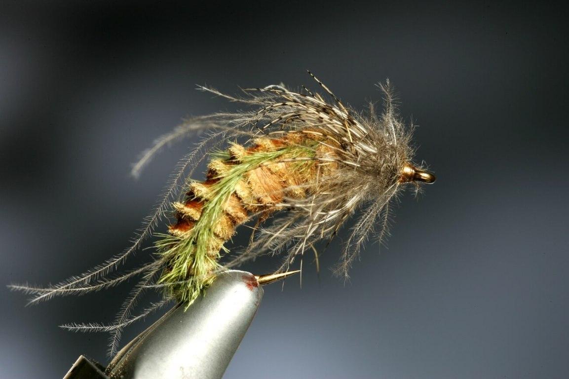 Bee Cee caddis pupa