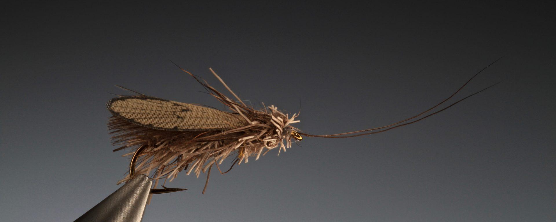 fly tying Wonder wing caddis