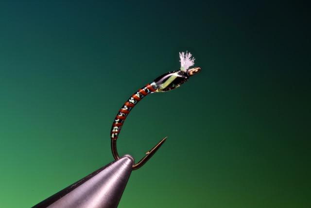 fly tying Quill body buzzer
