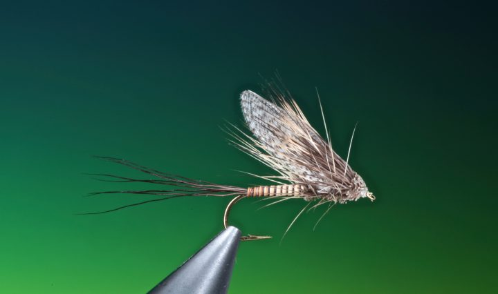fly tying Muddler mayfly dry fly