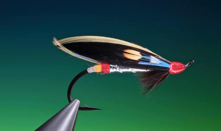 fly tying Nighthawk feather wing